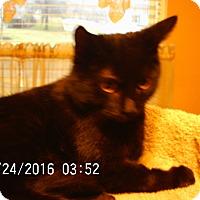 Adopt A Pet :: Chip - Bridgeton, MO