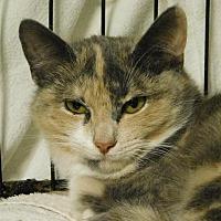 Adopt A Pet :: Bubbles - Winston-Salem, NC