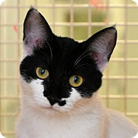 Adopt A Pet :: Athena - Chicago, IL