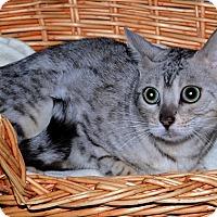 Adopt A Pet :: Pandora - Gatineau, QC