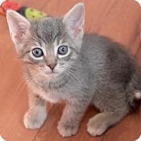 Adopt A Pet :: Frozen (Adoption Pending) - Richmond Hill, ON