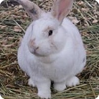 Adopt A Pet :: Iris - Quilcene, WA
