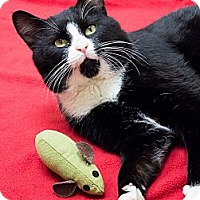 Adopt A Pet :: Fred Astaire - Chicago, IL