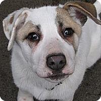 Adopt A Pet :: Bonnie - Surrey, BC