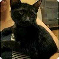 Adopt A Pet :: Babette - Orlando, FL