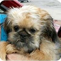 Adopt A Pet :: RILEY - ADOPTION PENDING - Little Rock, AR