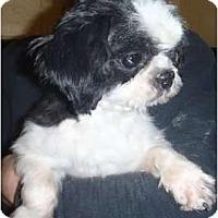 Adopt A Pet :: Oreo TINY! - Antioch, IL