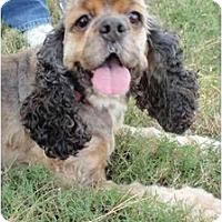 Adopt A Pet :: Cinnamon - Sugarland, TX