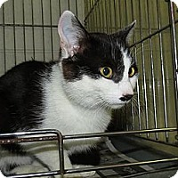 Adopt A Pet :: Leo - Chesapeake, VA