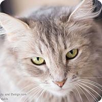 Adopt A Pet :: Suzy Q - Fountain Hills, AZ
