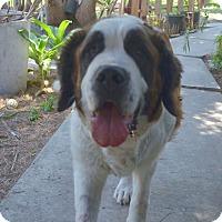 Adopt A Pet :: Annabelle - Bellflower, CA
