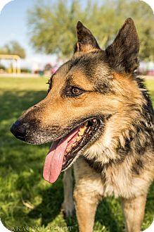 German Shepherd Dog Mix Dog for adoption in Phoenix, Arizona - Isaac