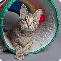 Adopt A Pet :: Princess Peach - Wilmington, DE
