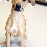 Adopt A Pet :: Miranda - Appleton, WI