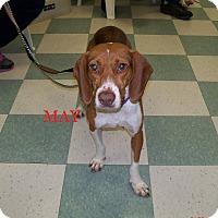 Adopt A Pet :: MAY - Ventnor City, NJ
