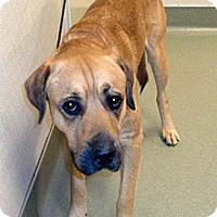 Adopt A Pet :: Charlie - Wildomar, CA