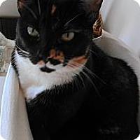 Adopt A Pet :: Penny - Morgan Hill, CA