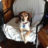 Adopt A Pet :: Wilma - Hendersonville, TN