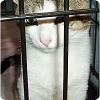 Adopt A Pet :: Cola - Westfield, MA