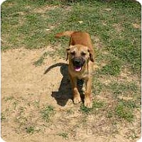 Adopt A Pet :: Tabby - New Boston, NH