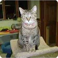 Adopt A Pet :: Goldie - Hamburg, NY