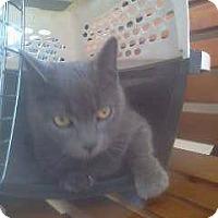 Adopt A Pet :: Yasmine - Riverhead, NY