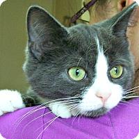 Adopt A Pet :: Charlie - Toledo, OH