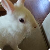 Adopt A Pet :: Lanister - Winnipeg, MB