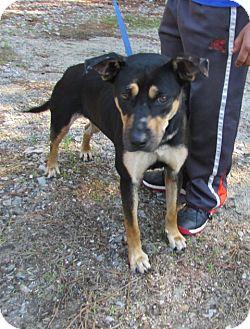 Labrador Retriever Mix Dog for adoption in Warrenton, North Carolina - Miya