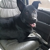 Adopt A Pet :: Nikki - Louisville, KY
