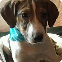 Adopt A Pet :: Dante - Union Grove, WI
