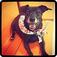 Dachshund Mix Dog for adoption in Grand Bay, Alabama - Lucy