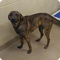 Adopt A Pet :: 1-10 - Triadelphia, WV