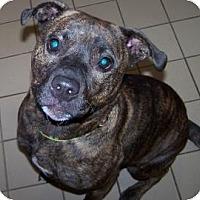 Adopt A Pet :: Nina - Jackson, MI