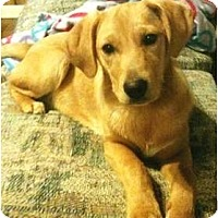 Adopt A Pet :: Toffee - Allentown, PA