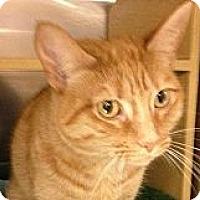 Adopt A Pet :: *Miss Kitty - Winder, GA