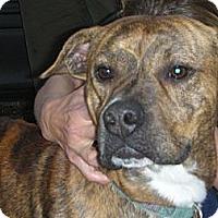 Adopt A Pet :: Tank - Fort Valley, GA