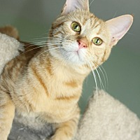 Adopt A Pet :: Lola - Yuba City, CA