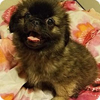 Adopt A Pet :: Monet - Detroit, MI