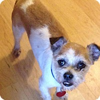 Adopt A Pet :: Little Hercules - Pompton Lakes, NJ