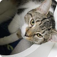 Adopt A Pet :: YJ - Medina, OH