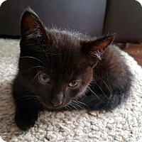 Adopt A Pet :: Bjorn - Adoption Pending - Blackstock, ON