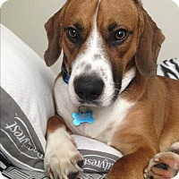Adopt A Pet :: Jinx (COURTESY POST) - Baltimore, MD