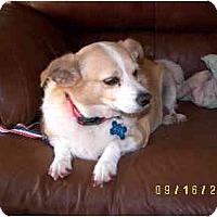 Adopt A Pet :: Purcy - Scottsdale, AZ