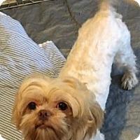 Adopt A Pet :: Ninja - Fairview Heights, IL