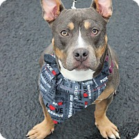 Adopt A Pet :: Ethel - Shrewsbury, NJ