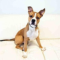 Adopt A Pet :: WRIGLEY - Hampton Bays, NY