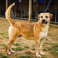 Adopt A Pet :: Happy Boy looking for a Home! - Jasper, AL
