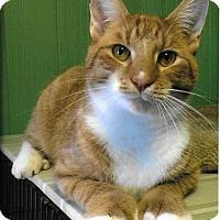Adopt A Pet :: Dalton - Medway, MA