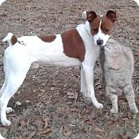 Adopt A Pet :: Petey - Attalla, AL